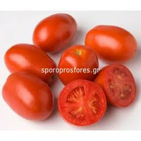 Tomatoes AG 23484
