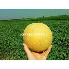 Melons Citirex