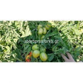 Tomatoes CXD 142 F1