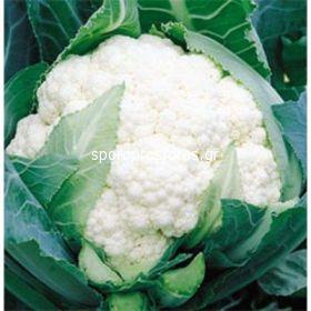 Cauliflower Ecrin F1