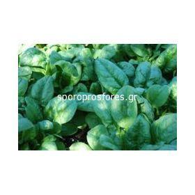 Spinach Clipper F1