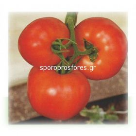 Tomatoes Lampetie f1