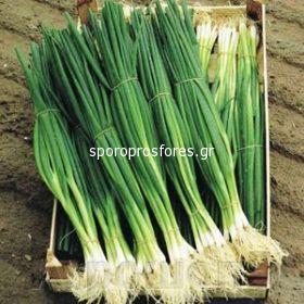 Green Onion Parade