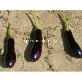 Eggplant Marfa F1