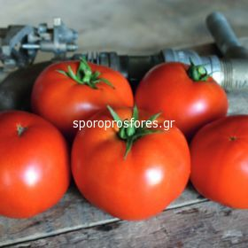 Tomatoes Red Bounty F1