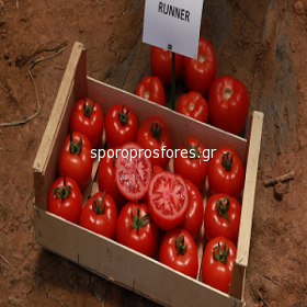 Tomatoes Vitara F1 (Runner)