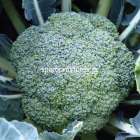 Broccoli Malibu F1